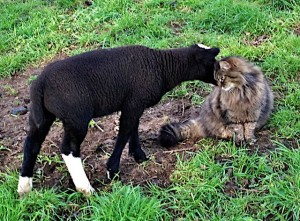 Smudge & Bodacious Greet each other warmly