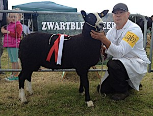 First place Zwartbles Ram Lamb 2014 Clonmel Show