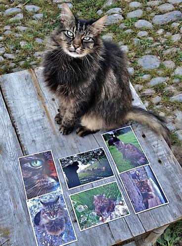 bodacious-postcards